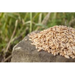 """Spelt """"Escanda"""" Ecological Grain"""
